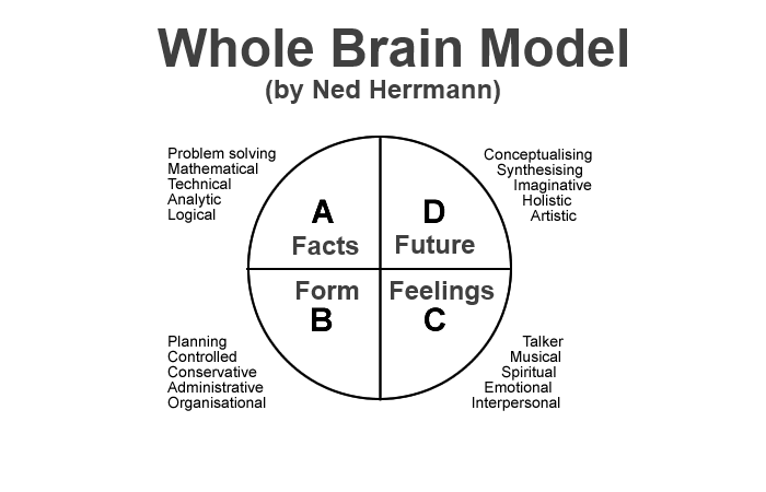 whole brain model - comindwork weekly